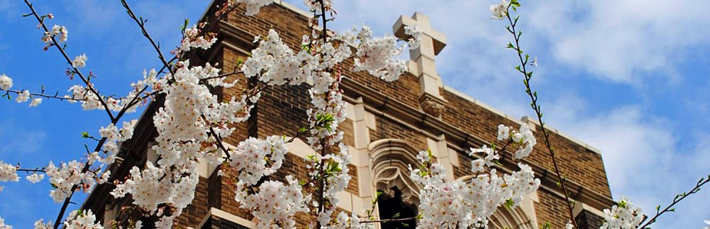 Augustana Tower with Cherry Blossoms